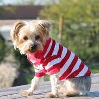 Striped dog polo - red and white size large