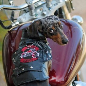 Biker Dawg Motorcycle Dog Jacket - Black size XSmall